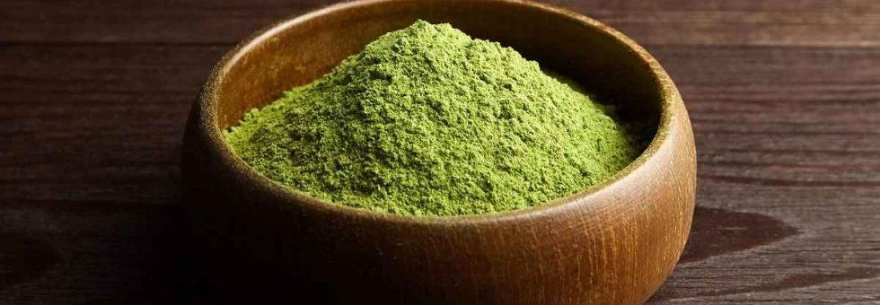 Wheatgrass or barley grass powder in wooden bowl on dark background.