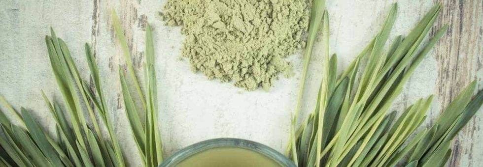 Vintage photo, Young powder barley, barley grass and beverage on old board